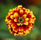 Flower detail. Bokeh Flower detail, macro close up Stock Photo