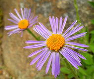 Flower detail Stock Photo