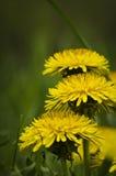 Flower detail Royalty Free Stock Photos