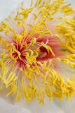 Flower details Stock Images