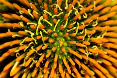 Flower Details Stock Photography