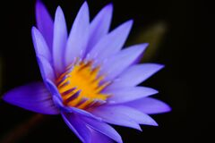 Flower Details Stock Image