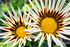 Flower details Royalty Free Stock Photos