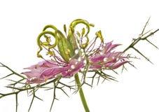 Flower with dew drops - macro Stock Photos