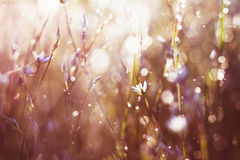 Flower in  dew Royalty Free Stock Images