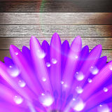 Flower with dew on wood. plus EPS10 Royalty Free Stock Photo