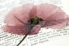 Flower on dictionary Stock Images