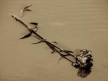 Flower discared on the beach Stock Photos
