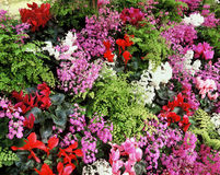Flower Display. Of colourful flowers in Botanical Gardens Stock Image
