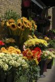 Flower display outside florist shop. Royalty Free Stock Photos