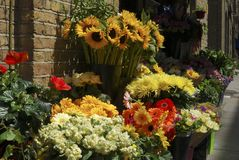 Flower display outside florist shop. Royalty Free Stock Photography
