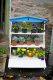 Flower display stand. Pansies and ice plants in pots on display stand Royalty Free Stock Images