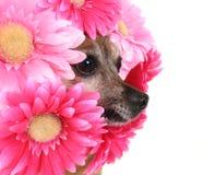 Flower dog Royalty Free Stock Image