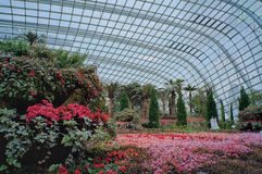 Flower Dome, Gardens by the Bay Stock Photos