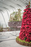 Flower Dome Gardens by the Bay. Attractive Christmas decoration at Flower Dome in Gardens by the Bay, Singapore Royalty Free Stock Photos