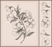 Flower drawing Stock Photography