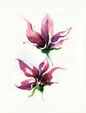 Flower drawn by pencil,brush and watercolor Royalty Free Stock Image