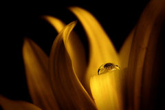 Flower in drop Royalty Free Stock Photo