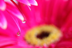 Flower within a droplet Stock Photo