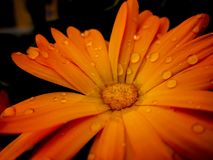 Flower with droplets. Stock Photos