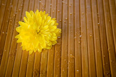 Flower and drops. Yellow flower and water drops on bamboo close-up royalty free stock photography
