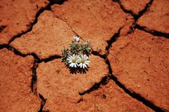 Flower in drought Stock Photo