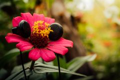 Flower and Earphone concept royalty free stock images