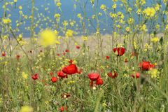 Flower, Ecosystem, Wildflower, Meadow stock photography