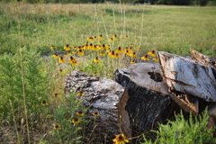 Flower, Ecosystem, Wildflower, Vegetation Royalty Free Stock Images