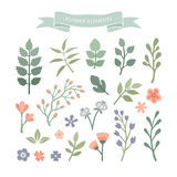 Flower elements. Stock Photography
