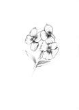 Flower English wallflower Royalty Free Stock Photography