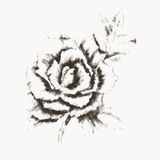 Flower engraving 3. Flower engraving. Vintage rose in gravure style for you design and ckrapbooking stock illustration
