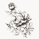 Flower engraving 2. Flower engraving. Vintage rose in gravure style for you design and ckrapbooking royalty free illustration