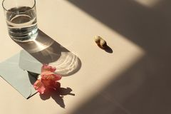 Flower, envelope, water, peanut on the table with shadow stock images