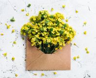 Flower in envelope stock photos