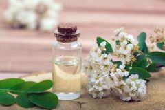 Flower essential oil. Essential oil in small bottle with spring flower on wood Stock Photos