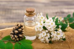 Flower essential oil. Essential oil in small bottle with spring flower on wood Stock Photography
