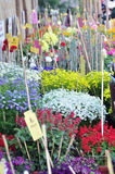 Flower exhibition Royalty Free Stock Photos