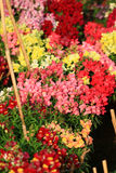 Flower exhibition Stock Image
