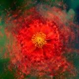 Flower - exploding Stock Photography