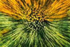 Flower explosion Royalty Free Stock Image