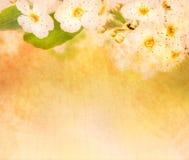 Flower extreme macro Stock Image