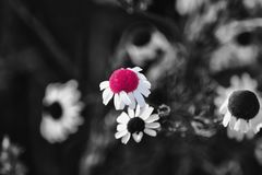 A living flower surrounded by the past royalty free stock image