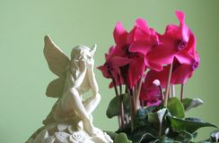 Flower and fairy. A pink cyclamen a and a fairy Royalty Free Stock Image