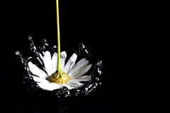 Flower falling Royalty Free Stock Photography