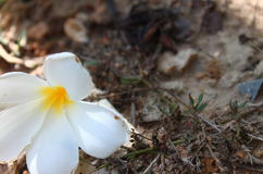 Flower falls. Stock Photo