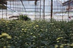 Flower farm Stock Images