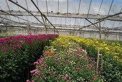 FLOWER FARM Stock Photo