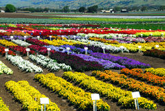 Flower Farm Stock Images