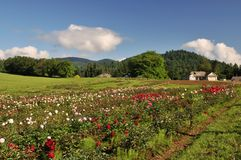 Flower farm in Mission, British Columbia Royalty Free Stock Photos